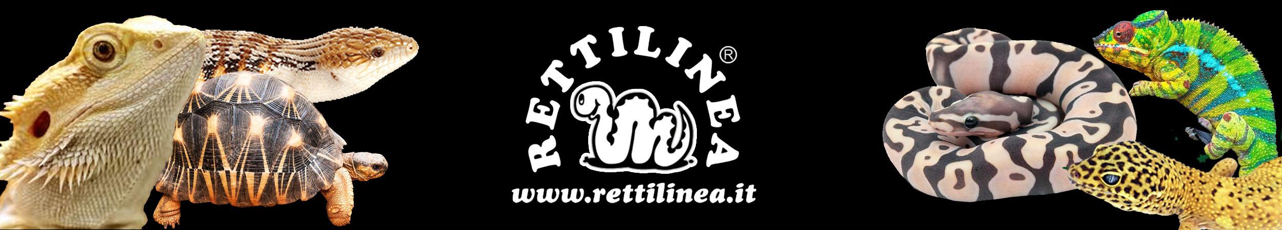 RETTILINEA
